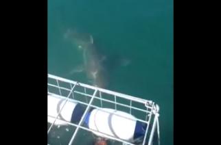 Persona se salva de un ataque de tiburón